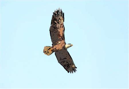bird flying into the blue sky cartooned design photo