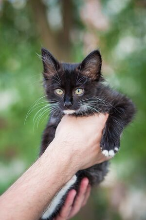 a black little kitten with a white mustache looks forward, being held in his arms