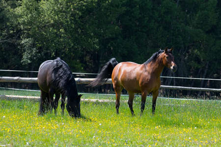Black and brown horses grazing in a paddock on a ranch