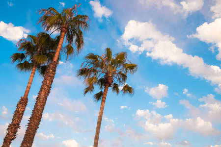 San Diego Palmen en Blue Sky, San Diego Southern California