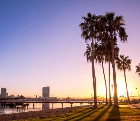 diego: California Palm Trees and City of San Diego, California USA  Stock Photo