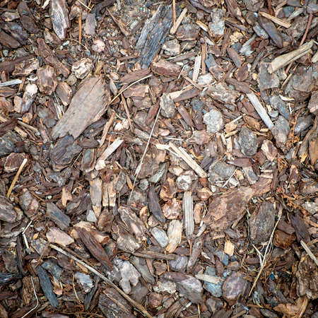 ground cover: Wood Chips Detail Background, Ground Cover Stock Photo