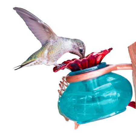 feeder: Humming Bird on a Bird Feeder Stock Photo
