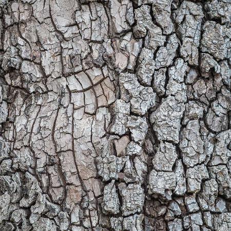 Detail van boomschors Stockfoto