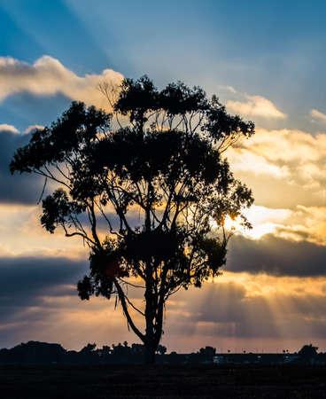 Silhouet van de boom en Zonsondergang bij Mission Bay San Diego, Southern California USA