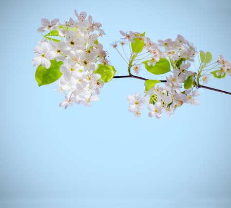 Witte bloemen op een tak op een witte achtergrond