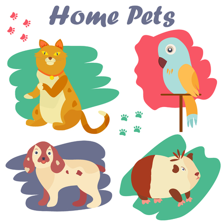 ferret: Bright images of domestic animals kitten, parrot, dog and guinea.