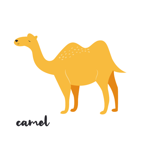 Cute camel on white background