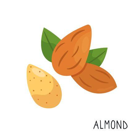 Cartoon flat almond isolated on white background