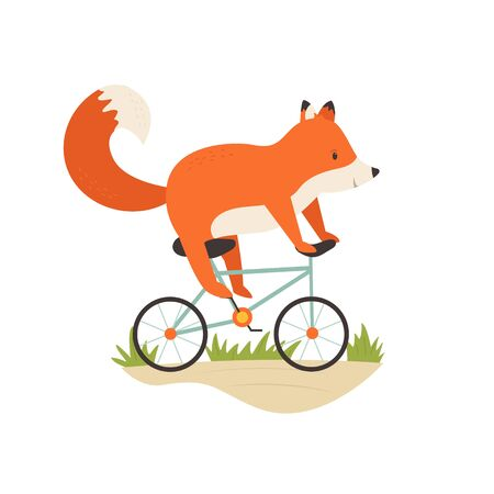 Funny fox riding a bicycle. Vector illustration.