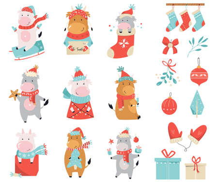 Set of cute holidays cows and bulls in winter clothes and other accessories. Merry Christmas vector cheerful illustrations 矢量图像
