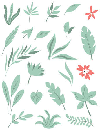 Set of various tropical leaves and flowers. Vector illustration