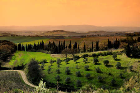Tuscan Countryside with olive groves in Chianti, Italy