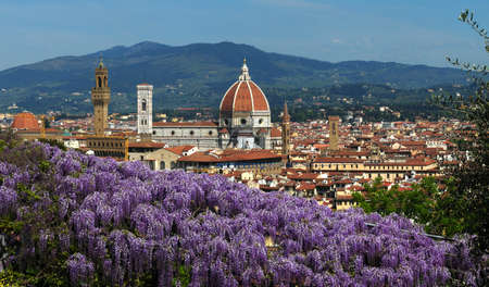 Panorama of Florence. Cathedral of Santa Maria del Fiore as seen from Bardini Garden with beautiful wisteria in bloom. Florence, Italy.