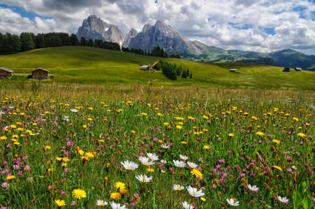 View of the Sassolungo (Langkofel) and Sassopiatto Group of the Italian Dolomites from Alpe di Siusi in Val Gardena.