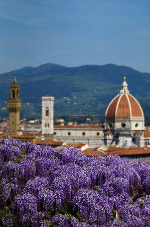 フィレンツェ、イタリアの背景にサンタ・マリア ・ デル ・ フィオーレ大聖堂を持つフィレンツェのバルディーニ庭園に咲く藤 写真素材