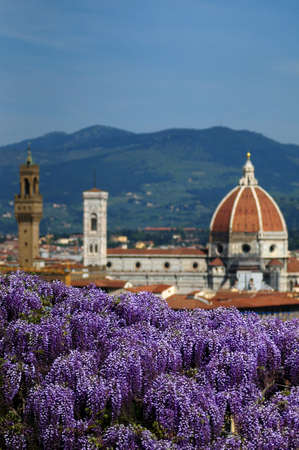 Blooming Wisteria at Bardini Garden in Florence with Cathedral of Santa Maria del Fiore on Background, Florence, Italy Archivio Fotografico