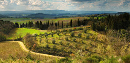 Beautiful Tuscan landscape with olive trees and cypress near Castellina in Chianti, Siena. Italy.