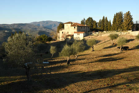Landscape of Tuscan countryside. Typical farm house in Tuscany with olive trees, cypress and cows. Stock Photo