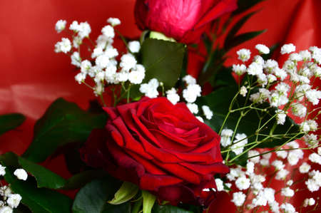 Close Up of Red Roses. background. Stock Photo