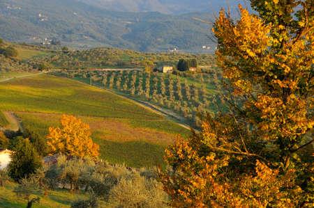 Vineyards in tuscany region during autumn season, Italy