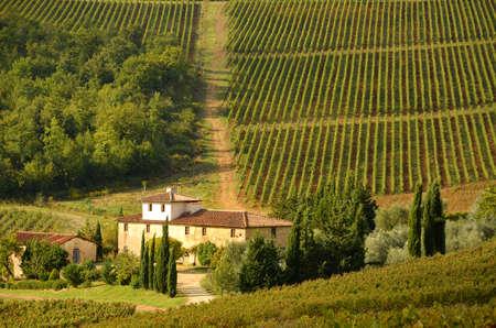 Wijngaarden in het gebied van Toscanië, Italië