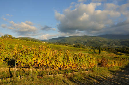 natures: The colors of autumn in a vineyard. tuscany, italy.
