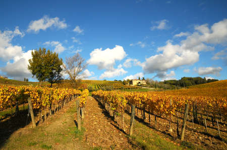 Vineyard in Autumn season and Blue Cloudy Sky. Chianti region in Tuscany. Italy.