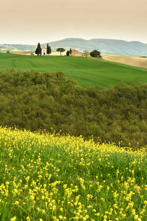 Italy Tuscany - April 24,2018 Chapel of Vitaleta or Vitaleta Chapel near San Quirico DOrcia in Tuscany. Yellow rapeseed flowers with the famous Chapel on background.