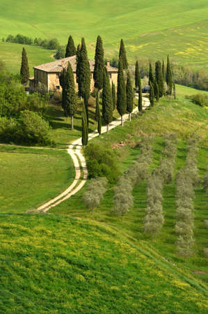 Italy, Pienza - April 24, 2018: Beautiful Tuscan landscape with green hills at Podere Belvedere near Pienza during spring season with yellow flowers, olive trees and cypress. italy