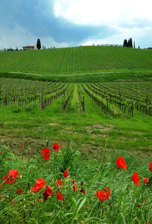 Springtime in Chianti. Red poppies and beautiful vineyards on the background with cloudy sky in Tuscany. Italy. Stock Photo