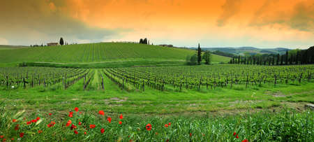 Springtime in Chianti. Red poppies and beautiful vineyards on the background with cloudy sky in Tuscany. Italy. Reklamní fotografie