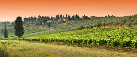 Beautiful green vineyard at sunset near Antella village (Florence, Chianti region, Tuscany in Italy.