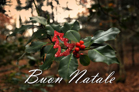 Holly red berries in the forest with text Merry Christmas