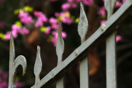 Detail of old wrought iron gate in a park in Florence. italy