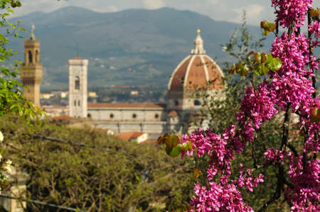 Cathedral of Santa Maria del Fiore in Florence as seen from the Bardini Garden during Spring Season with blooming purple trees (Judas Trees). Italy. Stockfoto