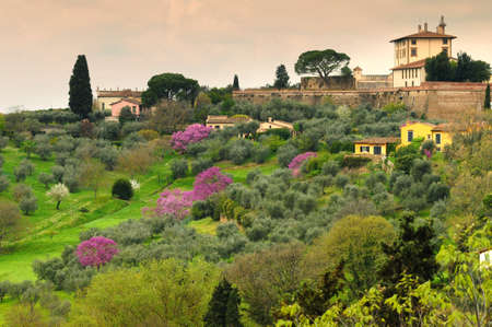 Purple flowered trees (Judas trees) under the walls of the Belvedere Fort in Florence, italy. Stockfoto