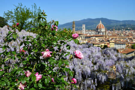 Beautiful view of the famous Cathedral Santa Maria del Fiore in Florence with purple blooming wisteria and Pink Roses in the foreground. Italy. Stockfoto