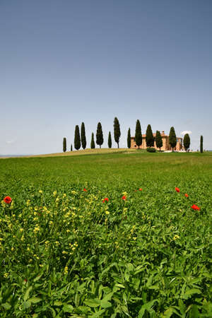 Pienza, Tuscany - June, 2019: Beautiful Tuscany landscape, farmland I Cipressini. Italian cypress trees and flowers on foreground with blue sky. Located at Pienza (Siena). Italy