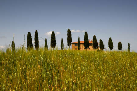 Pienza, Tuscany - June, 2019: Typical Tuscany landscape, farmland I Cipressini. Italian cypress trees and wheat field with blue sky. Located at Pienza (Siena). Italy Redactioneel