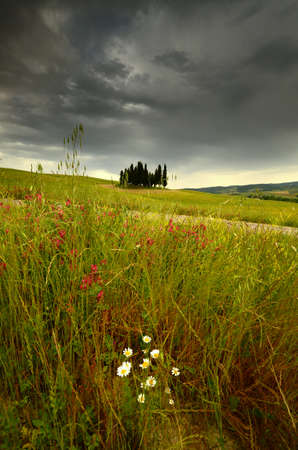 Val dOrcia, Italy- June, 2019: Cypress trees near San Quirico dOrcia with beautiful flowers in foreground and cloudy sky, Italy. Redactioneel