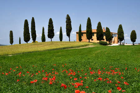 Pienza, Tuscany - June, 2019: Beautiful Tuscany landscape, farmland I Cipressini. Italian cypress trees and red poppies on foreground with blue sky. Located at Pienza (Siena). Italy Redactioneel