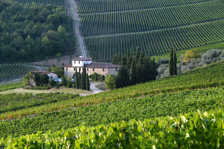 Sieci (Florence) - September 2019: beautiful vineyard and farmhouse in september before the grape harvest. Chianti region near Florence, Italy.