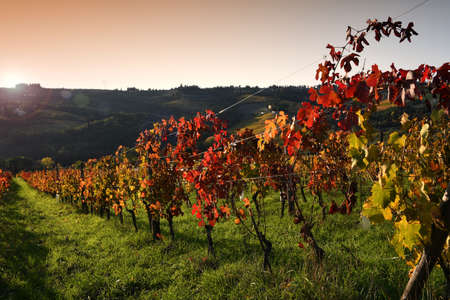 beautiful colorful vineyards at sunset during the autumn season in the Chianti Classico area near Greve in Chianti (Florence), Tuscany. Italy.