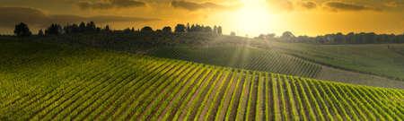 Beautiful vineyards in Tuscany at sunset near Mercatale in Chianti. Tuscany, Italy Foto de archivo