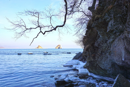 edge of the ice: rocks in the ice at the edge of the sea, tree against the sky Stock Photo