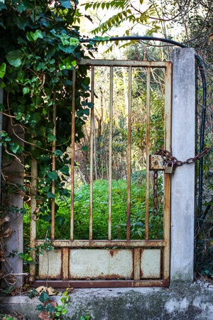 An Old Locked Rusty Gate With Green Plants In The Background