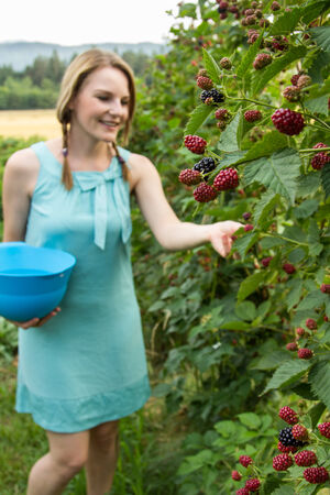 Young brunette woman in blue dress picking blackberries outdoors Stock Photo - 25603506