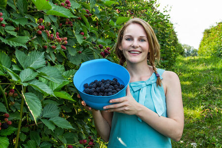Young brunette woman in blue dress picking blackberries outdoors Stock Photo - 25603514
