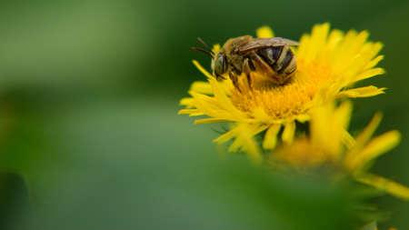 蜂蜜の蜂 写真素材